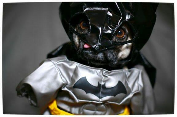 Vamers - Fandom - Batpug The Bark Knight - Batpug New World