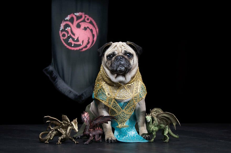 Vamers - Geekosphere - Mash-Up - The Pugs of Westeros star in A Game of Bones Dinner is Coming - Daenerys Targaryen