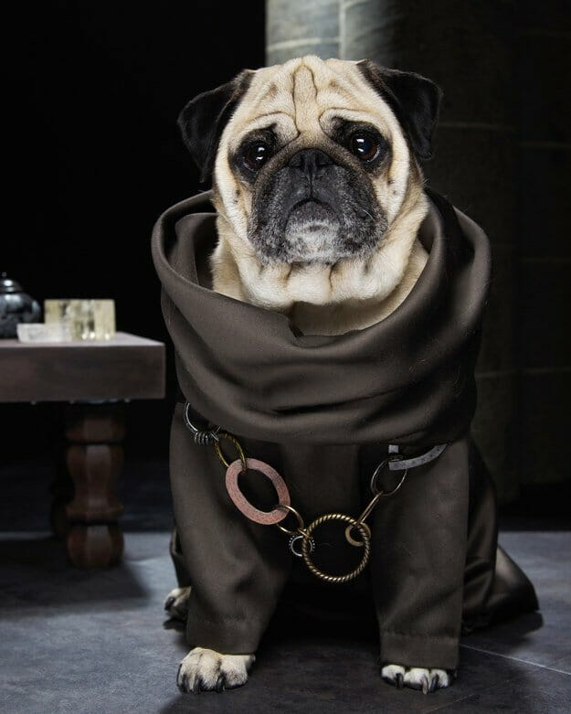 Vamers - Geekosphere - Mash-Up - The Pugs of Westeros star in A Game of Bones Dinner is Coming - Grand Maester Pycelle