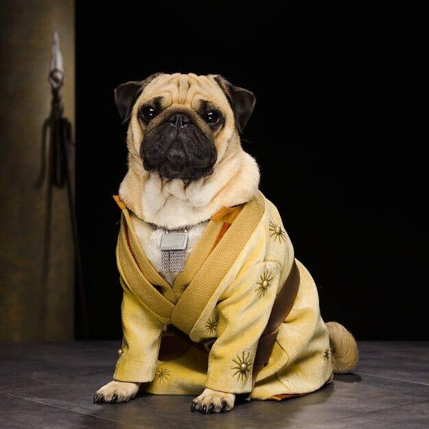 Vamers - Geekosphere - Mash-Up - The Pugs of Westeros star in A Game of Bones Dinner is Coming - Oberyn Martell