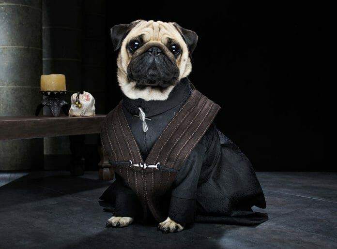 Vamers - Geekosphere - Mash-Up - The Pugs of Westeros star in A Game of Bones Dinner is Coming - Peter Baelish Littlefinger
