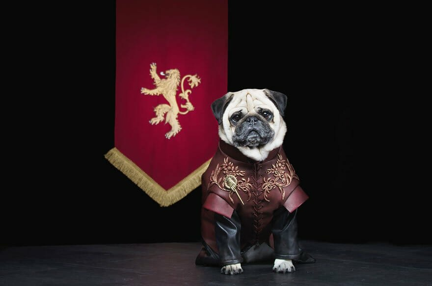 Vamers - Geekosphere - Mash-Up - The Pugs of Westeros star in A Game of Bones Dinner is Coming - Tyrion Lannister