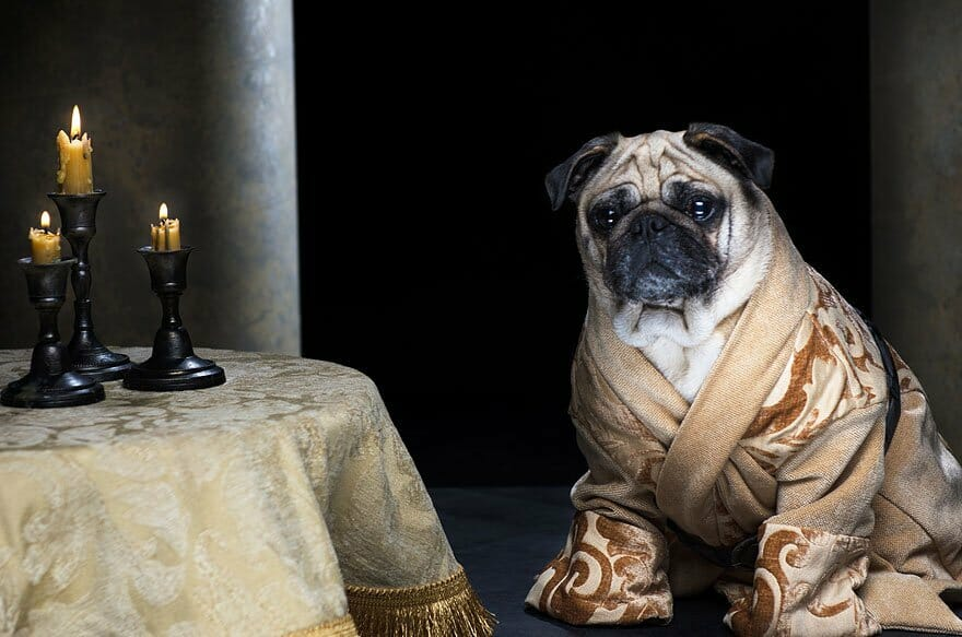 Vamers - Geekosphere - Mash-Up - The Pugs of Westeros star in A Game of Bones Dinner is Coming - Varys